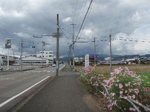 まり子さんを皆で応援しませんか? marikoさん皆さん今日は  先日の福井でのライブ行きの道中満開のコスモスに出迎えてもらいました