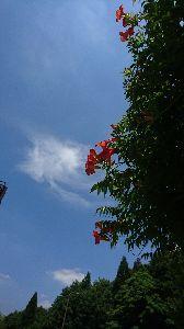楽しい時間を一緒に過ごしませんか? オレンジ色の綺麗な花(ノウゼンカズラ)も咲いて居ました   オレンジが青空に良く映えるよね。