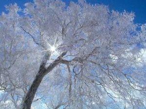 桜の木下で・・・・ 今日雪が降ったんですよ! 朝から気温が上がらなくて! でも   昼頃までは青空だったのに~~ 行きな