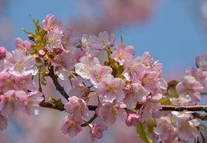 桜の木下で・・・・ 今週末には満開かな? なんか((o(^∇^)o))ワクワクする~~♪ 桜って言えば夜桜だ
