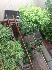 70才以上の部屋ですよ。 びびさん&皆様〜〜おはようございます。 今朝は曇りでしたが時折雨が降り出します。湿度が80%