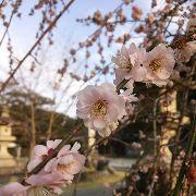奈良県で❕女性ライダー募集