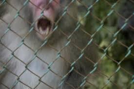 動物による被害 無職ザル捕獲器も作れ。檻の中に無職ザルの大好きなパチンコ台を入れて置く。  ※保健所の檻にて捕獲され