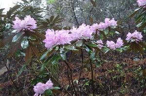 奥武蔵、奥秩父の好きな人集まれ! 【雨の降りしきる三峰山】 5月13日は雨のため秩父高原牧場は中止、代わりに三峰山に車で行って来ました