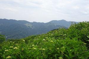 奥武蔵、奥秩父の好きな人集まれ! 【美の山】 今日は、秩父鉄道親鼻駅から美の山に登ってきました。 梅雨入りした直後でしたが、晴れ間が広