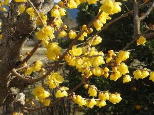 ☆ほのぼのしりとり家族誕生~Part2♪ [花が好き]  次は「き」です。  こんばんわ(^O^)/ ナポリさん♪  大助さん♪   まるちゃ