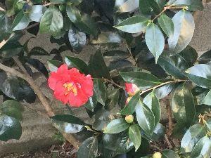 ながれながれて〜  > カシも富士山の画像を載せていたことがあった^^ > 最近は何故か?景色に限らず花の