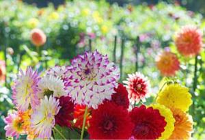 1418 - インターライフホールディングス(株) 開花。