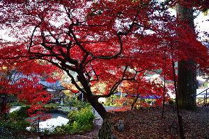 川西市周辺で女友達&彼女になってもいい方いませんか~ 兵庫県篠山市 「大国寺」の紅葉です。