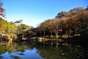 川西市周辺で女友達&彼女になってもいい方いませんか~ 神戸市 六甲高山植物園の紅葉です。