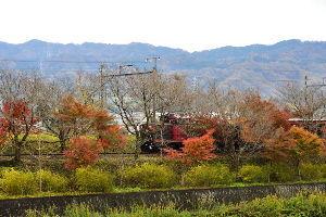 川西市周辺で女友達&彼女になってもいい方いませんか~ 亀岡市 紅葉の中を走るトロッコ列車です。