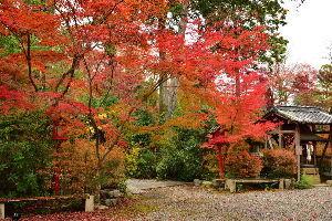 川西市周辺で女友達&彼女になってもいい方いませんか~ 京都府亀岡市 「鍬山神社」の紅葉です。 行った日が12日(日曜日)だったのでたくさんの人で賑わってい