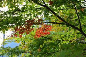 川西市周辺で女友達&彼女になってもいい方いませんか~ 宝塚市 武田尾の紅葉も色付きました。