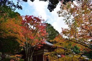 川西市周辺で女友達&彼女になってもいい方いませんか~ 三田市 花山院に紅葉を見に行って来ました。 前回は原付バイクで行ったのでわからなかったのですが、今回