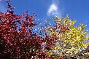 奥多摩ファン集合! 【御岳山の紅葉】 11月7日(火)御岳山へ紅葉狩りに行って来ました。 富士峰から御岳神社~長尾平まで