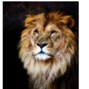 風に立つライオン