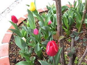 陰気で剛情な女房から逃げる方法 今日は^^ こちらは一気に春めいて、風もなくお花見日和?です。 皆様はいかがお過ごしでしょうか?