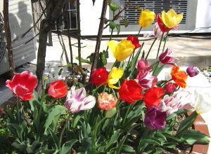 陰気で剛情な女房から逃げる方法 皆様今日は^^ 暖かい日が続き、もうすっかり春です。でも花粉症が辛い・・・  エコさん(&acute