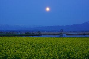 小さな旅って 見上げれば満月でした。 最近 れんげも 菜の花もごくわずかしか植えられず また 麦を植える田んぼは皆