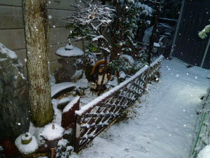 新装開店★スナック★☆湘南☆ 今しがた   庭に行ってみたが、湘南の雪が良い風情を演じてくれてるぜ!!・・・・・・・・・・・・・・