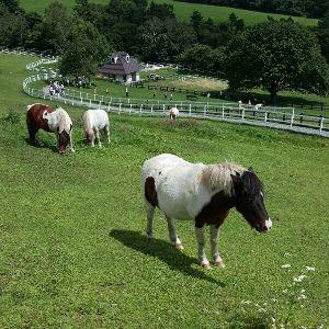 書き込み隊 清里  八ヶ岳牧場のお馬さん達  人も、このくらい優雅に過ごしたいね♪