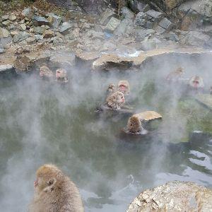 書き込み隊 帰ってまいりました!  地獄谷野猿公苑  猿の入浴料は0円です  人の入園料は500円で温泉には入れ