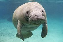 8358 - スルガ銀行(株) 源ちゃんのイメージは 世界で一番平和な動物 マナティみたいな感じだよ。  無駄な争いは好まない 温厚