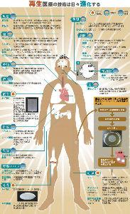 BMY - ブリストル・マイヤーズ・スクイブ 臓器別のがん治療から、臓器ごと置き換えるがん治療へ  再生医療でも、BMYと日本企業のアライアンスを