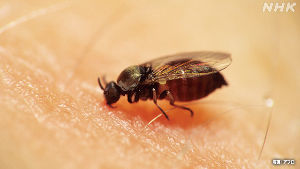 投資と投機 かまれると呼吸困難 死亡も… 夏に注意する虫は   2020年7月2日 6時17分