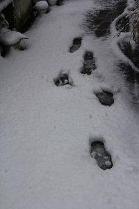 ゆらゆらと・・・ 寒いと思ったら雪になりました