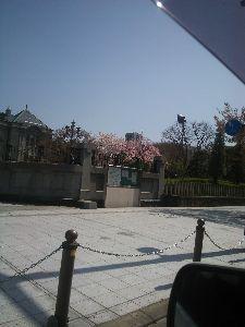 山形発メル友からスタートしませんかぁ 文翔館の桜