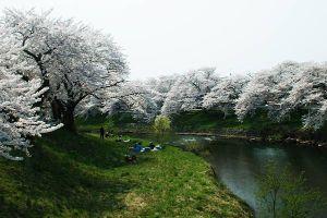 季節のご挨拶  お元気でしょうか。札幌も花の季節を迎えますね。  こちらはきょうは気温が低く、またストーブを使って