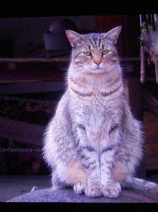猫自慢 こんにちは~♪