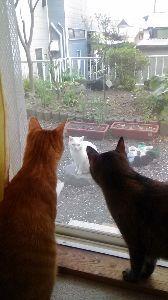 猫自慢 4匹の猫