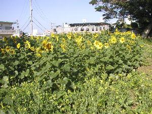 沖縄県のお友達が欲しいです! ハイサイ、トピ主さん、ロムの皆さん、あけましておめでとうございます。  沖縄の正月の畑には、&rdq