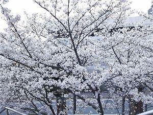 ミ☆くもりのち晴れ♪☆彡 今日も仕事お疲れさまです(*^.^*)  ゆうひちゃんは、明日は休みですか? お花見 行けたら良いね