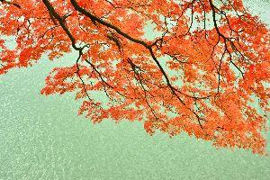 大型新人演歌歌手・津吹みゆ 津吹みゆ(つぶきみゆ) 「会津・山の神」 「わたしの門前仲町」  デビュ-8ヶ月半、低迷する演歌・歌