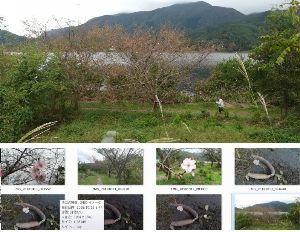6481 - THK(株) 妥当株価=日経平均22222円=THK2222円 河口湖では巨大ウナギの死骸による汚染が進んでいます