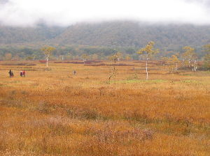3687 - (株)フィックスターズ 尾瀬ですか羨ましい 桧枝岐は紅葉の季節に何度か 尾瀬沼から裏燧ケ岳林道と燧ケ岳を一周して楽しんだ事が