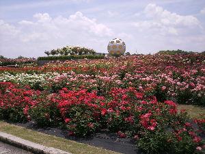 できればご近所で まあ~~お元気で何よりですね(*^▽^*)  私は毎日「老婆の休日」です。  花を追いかけてアチコチ