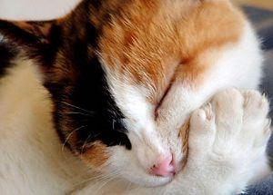 ☆☆究極の暇つぶし・画像しりとり☆☆ 眠り猫  → こ  ご  左甚五郎の作ではありません