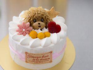 ☆☆究極の暇つぶし・画像しりとり☆☆ ケーキ  次は「き」  こんばんわぁ(*^o^*)♡
