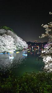 シニアになっても love and more 3月最終日 見事な桜が風に舞っています こころさん元気ですか  桜は満開をチョッと過ぎた 今ごろが好