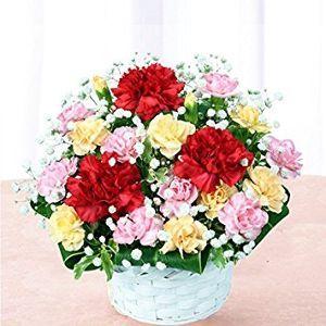 ビアンです☆ここで出会いませんか? ビアンのみなさん、初めまして、こんにちは。  ビアンのみなさんに綺麗な花キューピットの花束を贈ります