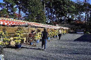 なんとなく写真 菊の花展(牡丹苑)