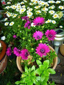 なんとなく写真 今日は一日中雨。庇の下で庭の花を眺めるのも良し・・かな。