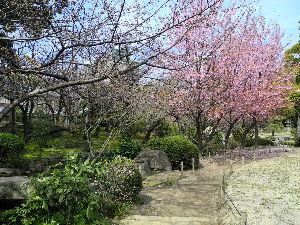 なんとなく写真 明日から暖かくなるとかで 嬉しいのですが 花粉のほうがこれから多くなって行くのは これも又辛いです。