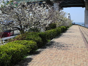なんとなく写真 四月だと言うのに中々気温などが定まりませんね この寒暖差に体が付いて行きません 花粉も最悪です でも