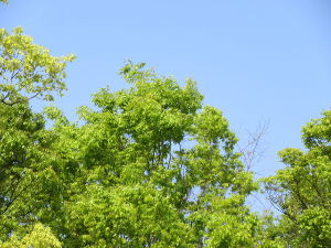 なんとなく写真       新緑の春        風もおだやかです