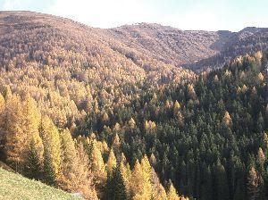 みんなでドロミテへ行こう! SestoのElmo山の黄葉です。個人的には全面黄色よりも、 先っぽだけ黄色の方が味わいがありますね